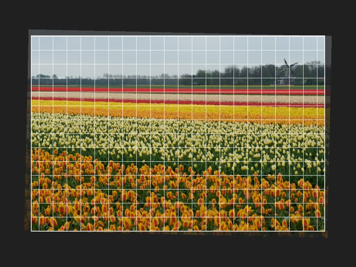 Foto's croppen en horizon rechtzetten
