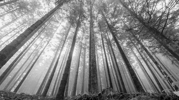 Zwart-wit landschap in de mist, Madeira