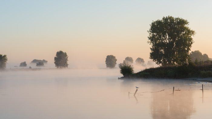 Een prachtige ochtend met mist boven de Maas.