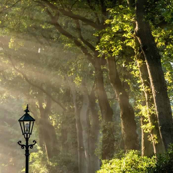 Lichtstralen in de mist fotografeer je het beste met tegenlicht of licht dat van opzij komt, zoals in deze foto.