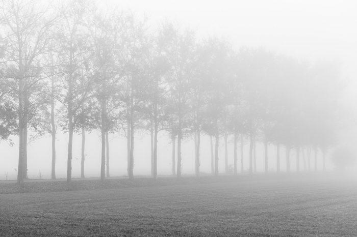 Dit zijn dezelfde bomenrijen, maar nu vanaf de zijkant. Omdat de afstand tot de bomen minder verschillend is, is het diepte-effect door de mist ook minder sterk.
