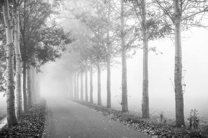 De mist benadrukt de diepte in de foto, doordat de bomen telkens op een grotere afstand van de camera staan