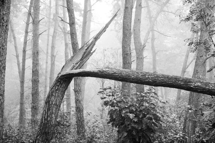 Kies een interessant element in de mistfoto's. De geknakte boom trekt duidelijk de aandacht in de foto.
