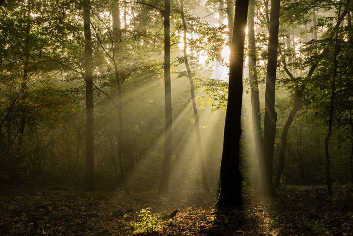 Lichtstralen worden zichtbaar wanneer het mistig (of stoffig) is en het licht wordt gebroken door bijvoorbeeld bladeren en takken.