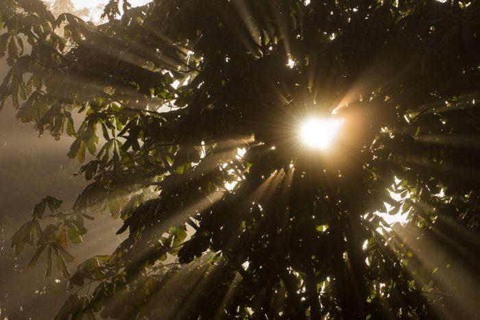 Voor het fotograferen van lichtstralen hoeft de mist niet heel dik te zijn
