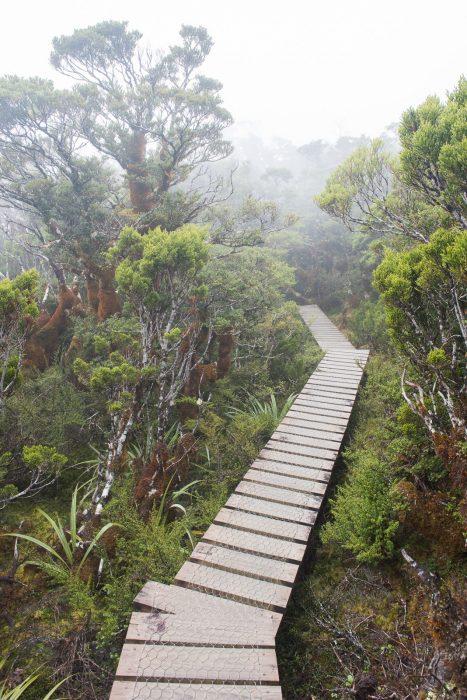 Wandeling in Fjordland, Nieuw-Zeeland.