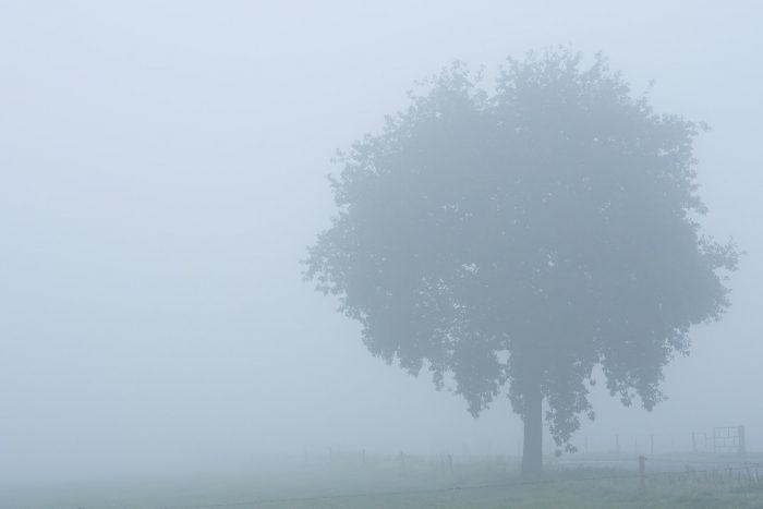 De camera kan moeite hebben met het scherpstellen bij mistfoto's. Zet hier het scherpstelpunt op de rand van de boom. Lukt het de camera nog steeds niet? Kies dan voor manuele scherpstelling.