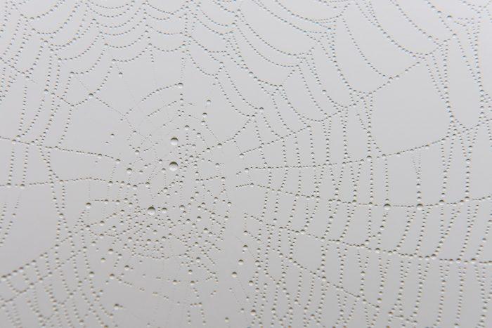 Druppels in een spinnenweb. Door het lage standpunt geeft de mistige lucht een lichtgrijze achtergrond.