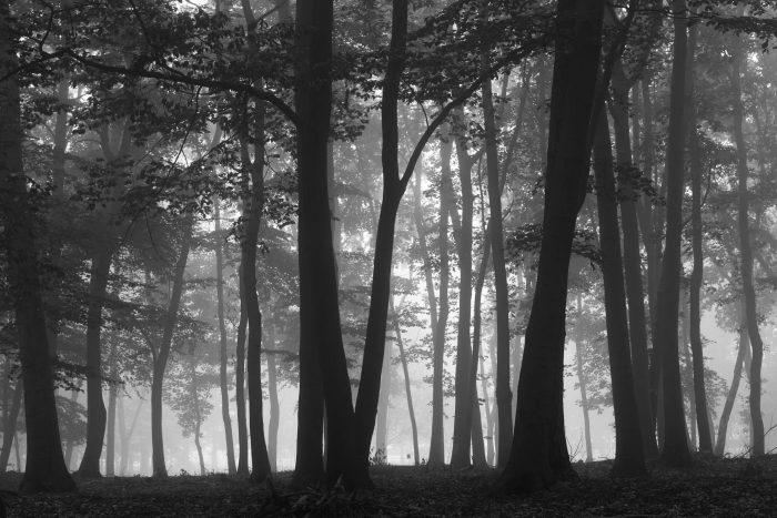 Mistfoto zwart-wit