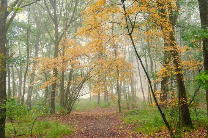 Denk niet dat je de herfst alleen kunt fotograferen als het mooi weer is. Ook als het bewolkt of mistig is, kun je heel goed de herfst vastleggen.