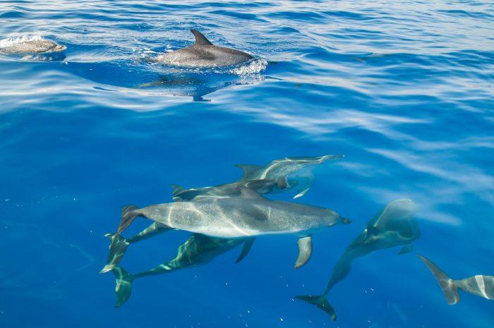 Het water was super helder en de zon stond precies goed, waardoor je de dolfijnen onderwater goed zag. Heb je last van reflecties? Dan kan een polarisatiefilter goed helpen!