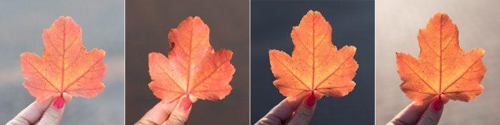 Oranje herfstbladeren