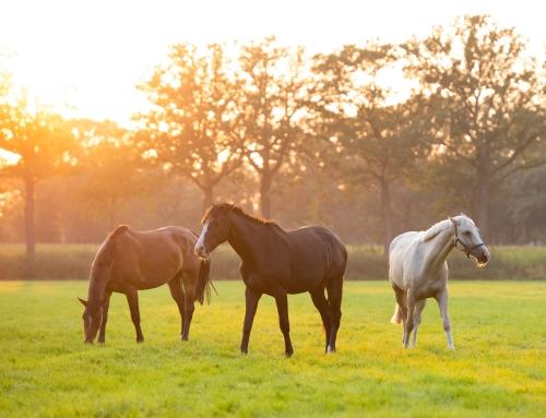 Fotografiechallenge oktober: boerderijdieren