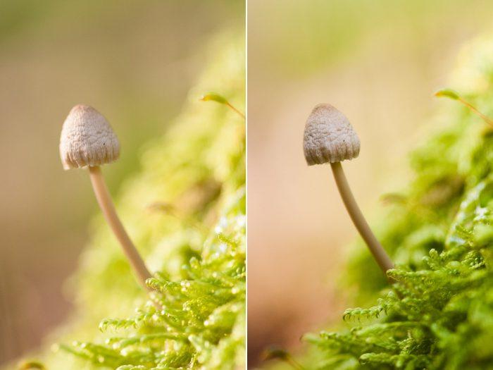 Kijk ook goed naar het licht op de paddestoel zelf. Een verandering van licht zorgt voor een andere balans in de foto.
