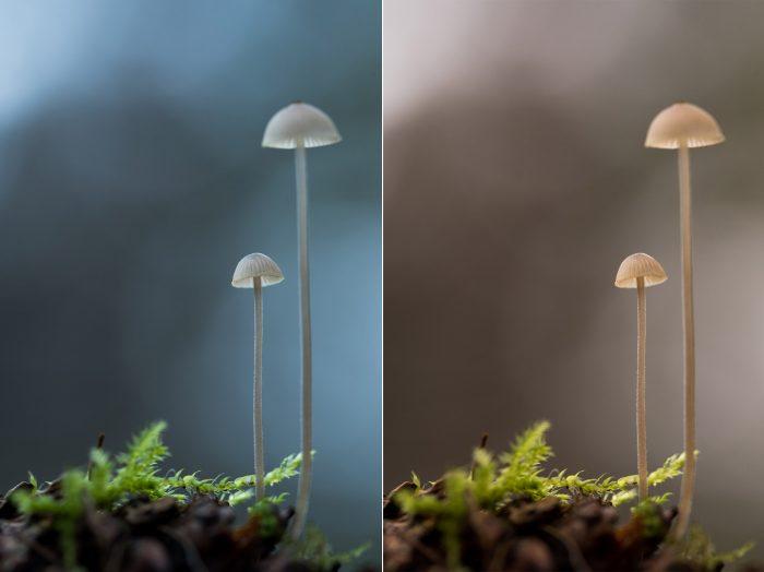 Een koele witbalans is niet per definitie fout. Soms geeft het juist een fijne sfeer in de foto, zoals links het geval is.
