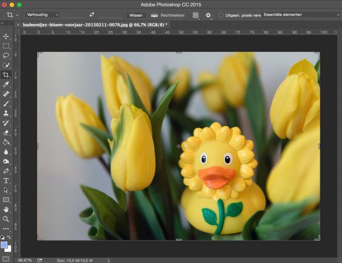 De foto met witbalans 'Automatisch' in Lightroom (die ik dus eigenlijk iets te blauwig vind) exporteerde ik en opende 'm vervolgens in Photoshop. Met de functieAutomatische Kleuren kreeg ik vervolgens dit resultaat.