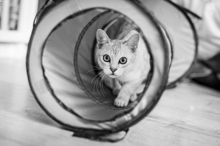 Omdat in de speeltunnel minder licht is, heeft de kat grotere pupillen.
