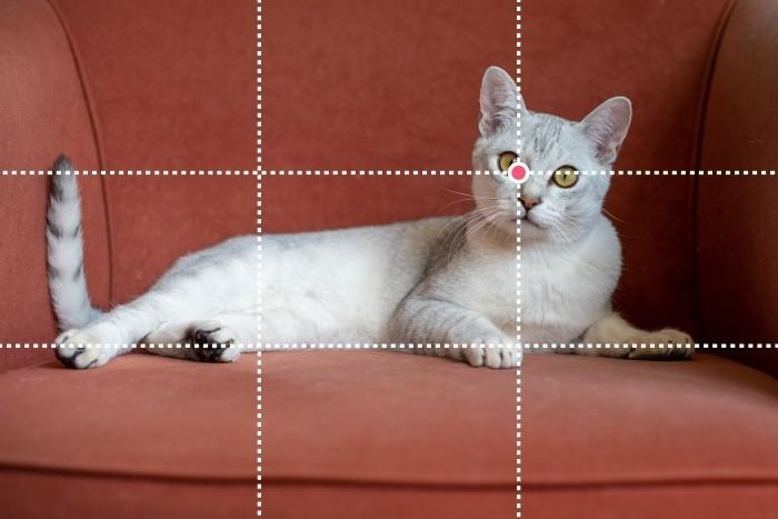 Het oog van de kat valt onder een snijpunt van de lijnen. De onderkant van zijn lijf ligt langs de onderste horizontale lijn