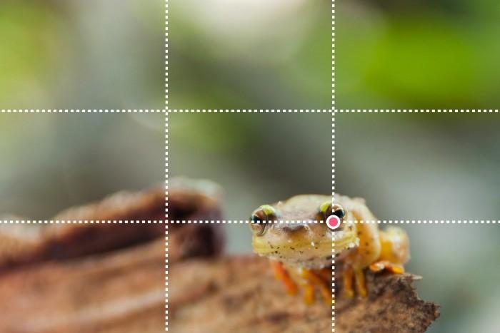 Oog van de kikker onder snijpunt volgens regel van derden