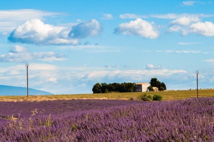 Lavendelveld in Franrijk