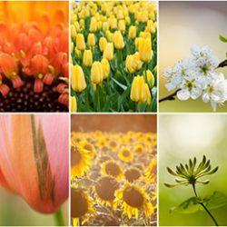 Regenboog collage van bloemen