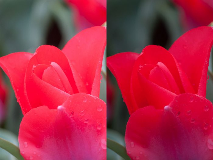Rode bloem fotograferen