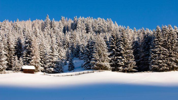 Sneeuw fotograferen in de ochtend