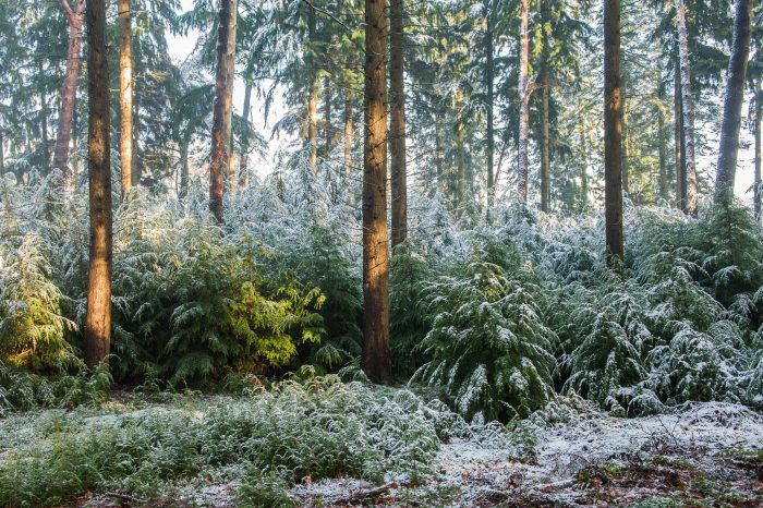 Twee uur later en het poederlaagje sneeuw op de takken was verdwenen.
