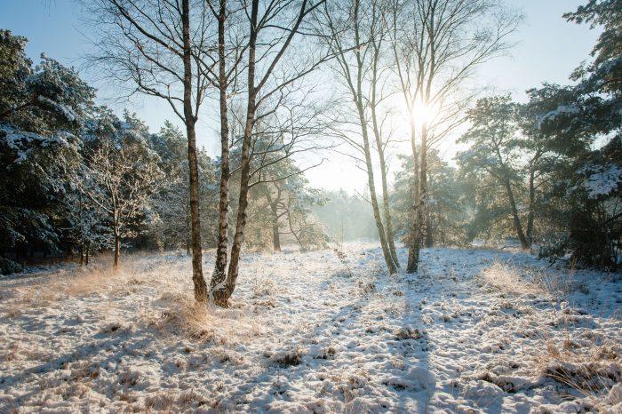 Fotografeer je in de sneeuw met tegenlicht? Ook dan is het belangrijk om de belichting goed te controleren aan de hand van het histogram.