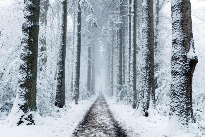 Laan met bomen in de sneeuw.