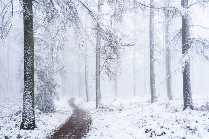 Bos in de sneeuw en in de mist