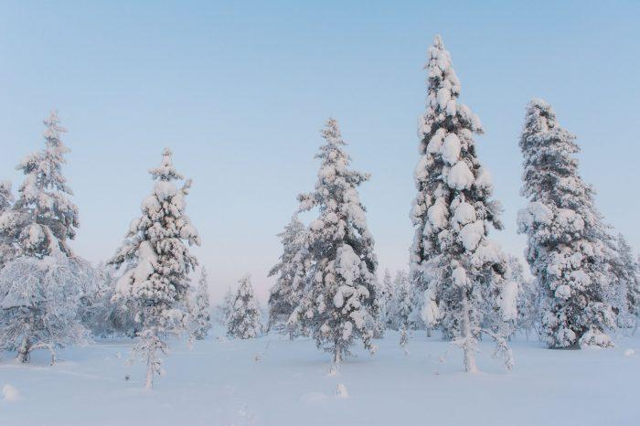 De bomen steken beter af tegen de licht blauwe lucht. Ook staan de bomen meer los, wat de foto rustiger maakt.