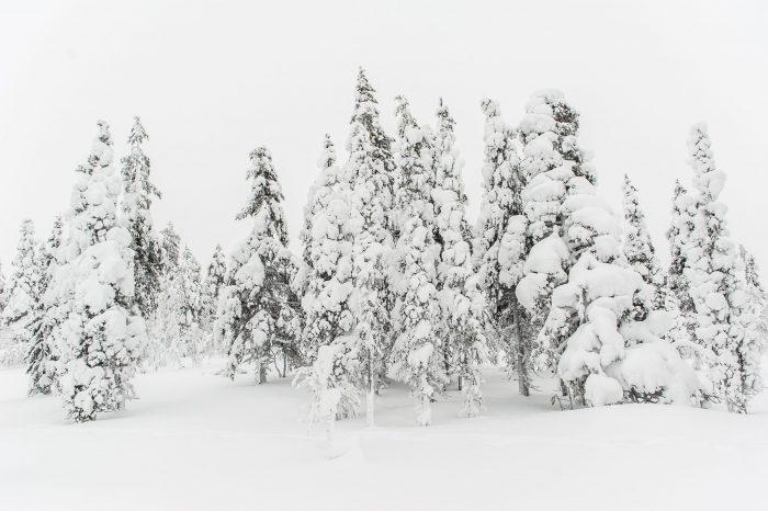 De lucht is net zo wit als de sneeuw en omdat de bomen dicht bij elkaar staan, oogt de foto wat rommelig.