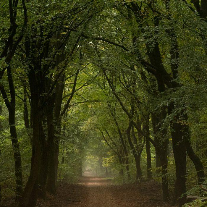Groene bladeren in het bos; het is nog te vroeg in de herfst!
