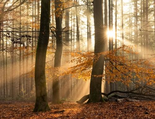 Speulderbos in de herfst – Dansende bomen