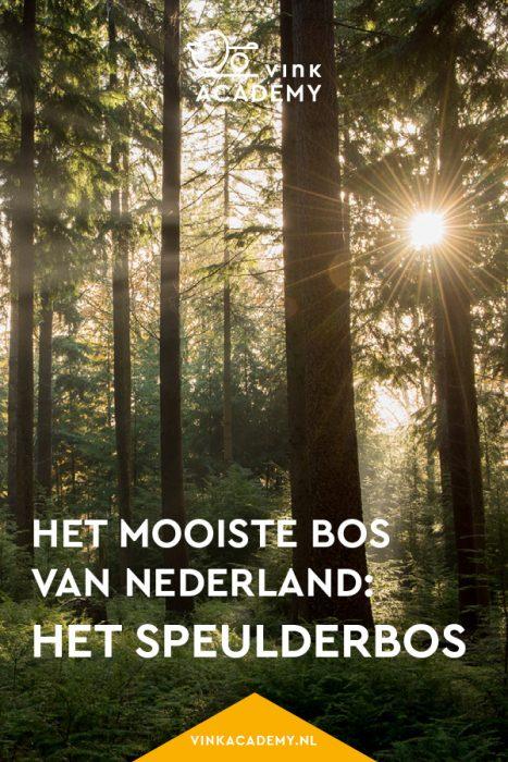 Speulderbos: het mooiste bos van Nederland