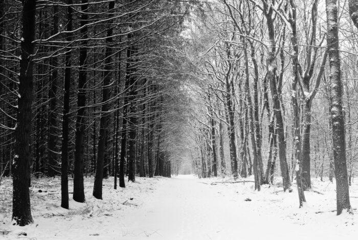 Zwart-wit foto van bomen in het bos