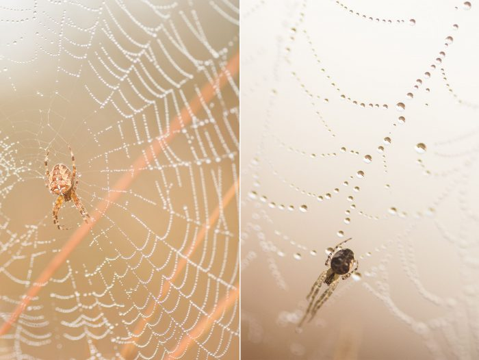 Links: het is jammer van de sprietjes op de achtergrond. Rechts: het web en de houding van de spin zorgen voor een mooie diagonale lijn in de foto