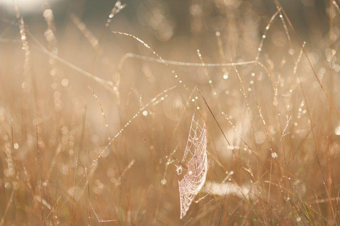 Het spinnenweb had amper opgevallen als er geen dauwdruppels aan hingen.