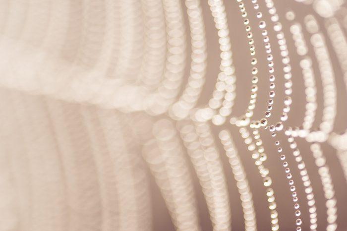 spinnenweb-fotograferen-2193