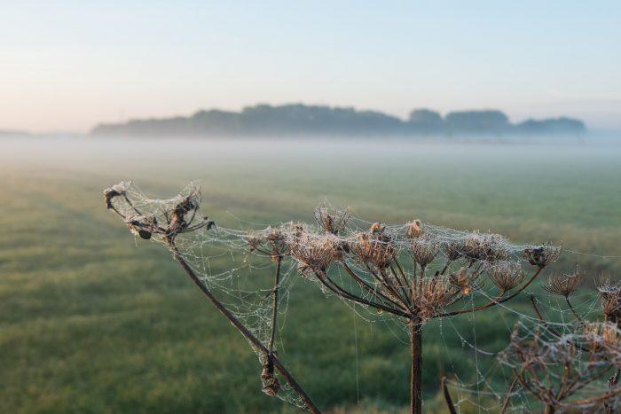 De mist zorgt dat de dauwdruppels zich hechten aan het spinnenweb.