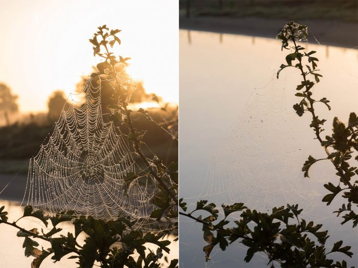 In deze tegenlicht situatie is het spinnenweb veel duidelijker zichtbaar tegen de donkere achtergrond dan tegen het water. Het enige wat in deze foto anders is, is het standpunt.