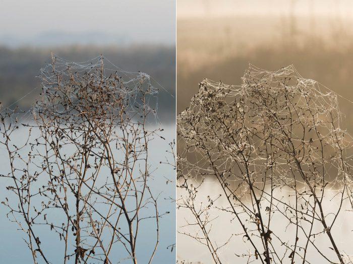 Links: Het licht komt van opzij. Je ziet de spinnendraden alleen aan de bovenkant van de plant afsteken tegen de donkere achtergrond. Rechts: door de plant meer van opzij te fotograferen krijg je door het tegenlicht nog beter zicht op het spinnenweb.
