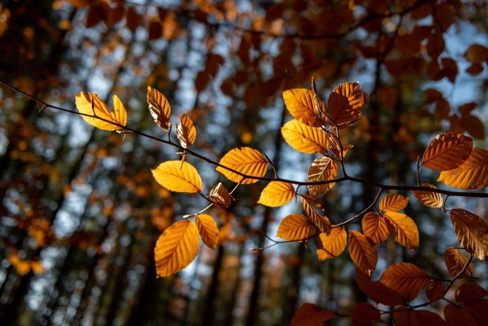 Herfstbladeren in het Sprielderbos