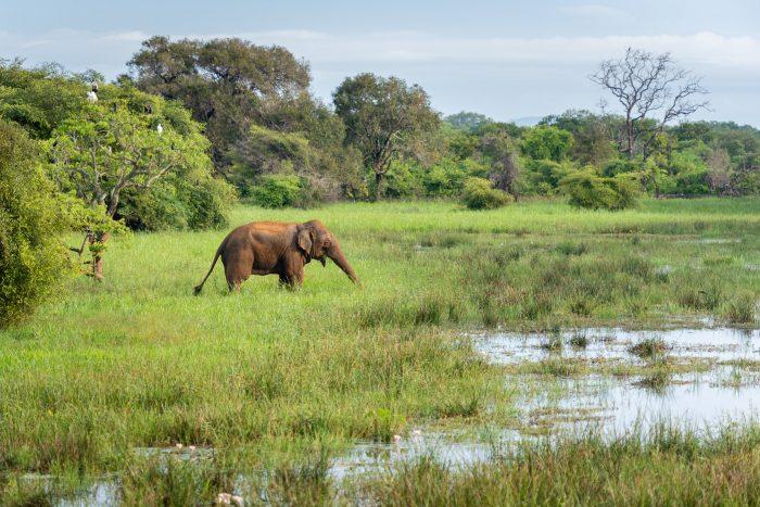 Mooi landschap, mooi licht, olifant... Happy me met deze wildlife foto!