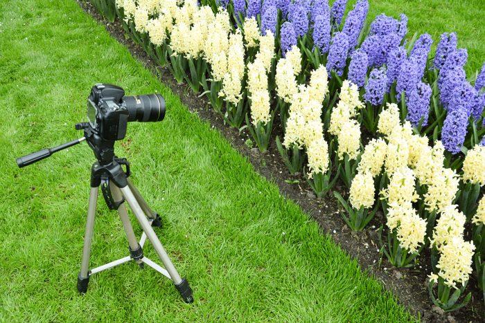 Statief bij het fotograferen van bloemen
