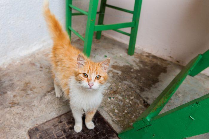 Ook als je buiten (straat)katten fotografeert, let je goed op de omgeving. Dit was een super lief dier dat bij het restaurant van z'n baasjes rondliep in Griekenland. Maar de foto is niet in balans.