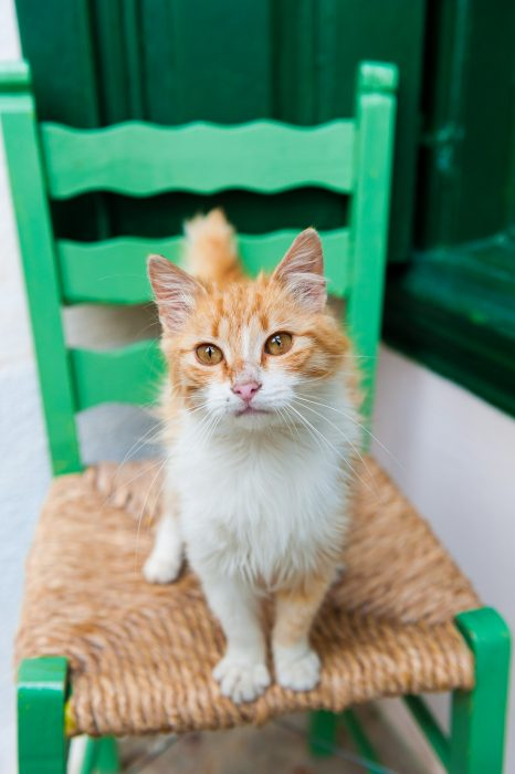 De foto op de stoel is veel rustiger. Bovendien kleurt z'n oranje vacht mooi met het groen van de stoel en de kozijnen op de achtergrond.