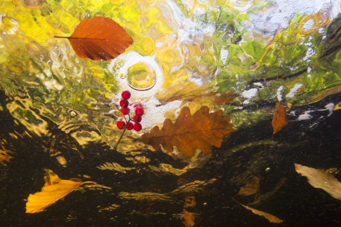 Theo Bosboom - Reis van de herfstblaadjes