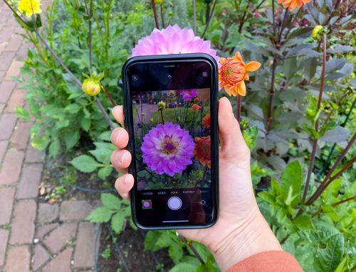 Visueel zoeken: planten, dieren en meer herkennen aan de hand van foto's